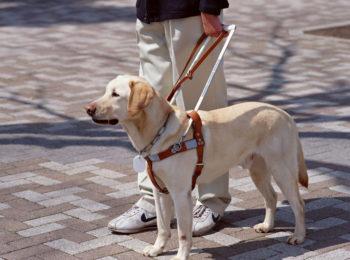 La foto mostra un cane guida con il suo padrone