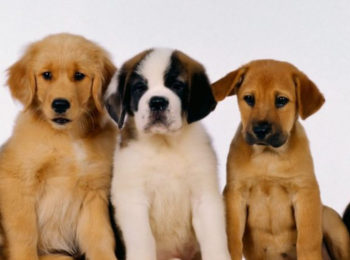 La foto mostra cinque cani di diverse razze