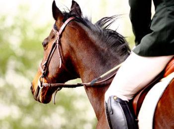 La foto mostra un cavallo cavalcato da un fantino