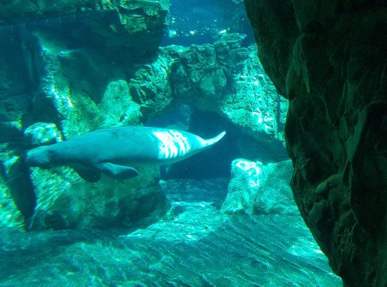 La foto mostra un fondale marino popolato da animali