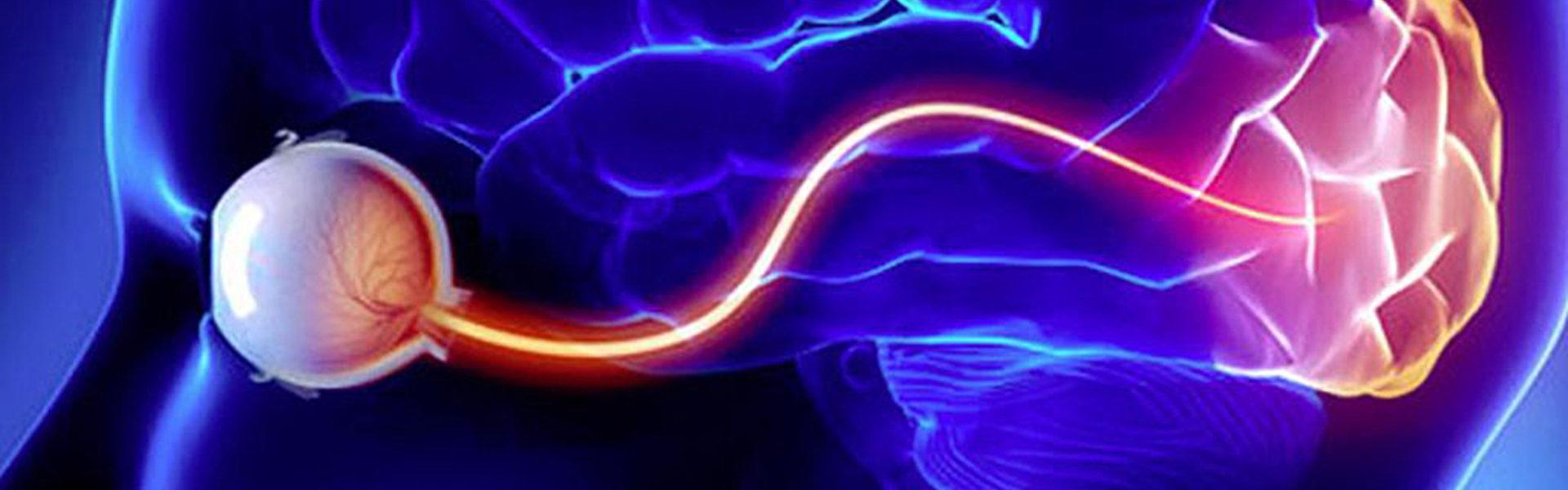 L'illustrazione mostra uno schema generico del sistema visivo
